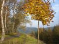 Goldener-Herbst